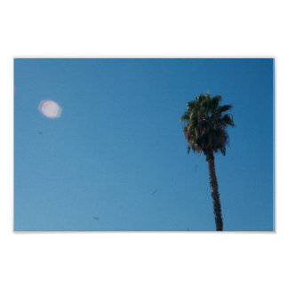Palm tree photography poster