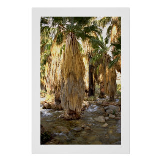 Palm Tree  Posters