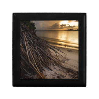 Palm Tree Roots at Sunset Gift Box