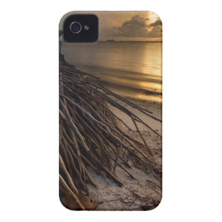 Palm Tree Roots at Sunset iPhone 4 Covers