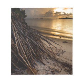Palm Tree Roots at Sunset Notepad
