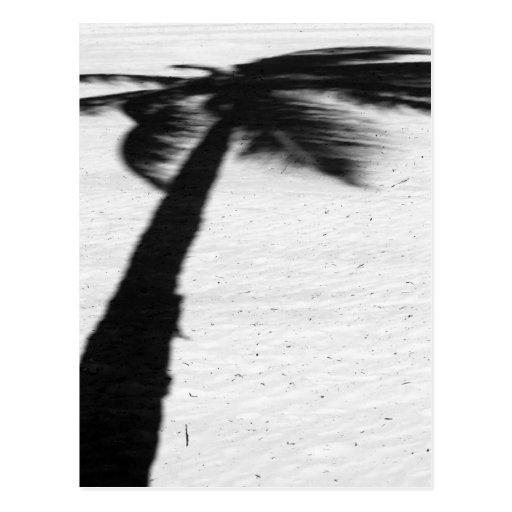 palm tree shadow postcard