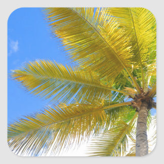 Palm tree square sticker