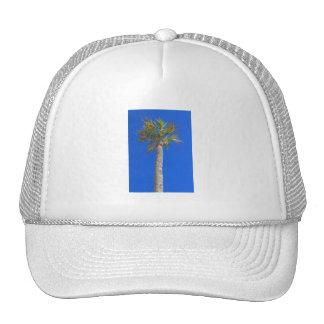 Palm Tree Sunny Blue Sky Hat