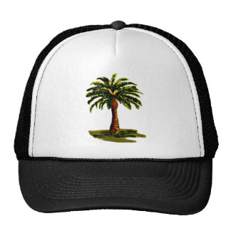 Palm Tree The MUSEUM Zazzle Gifts Mesh Hats