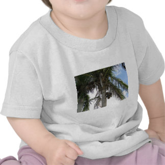 Palm Tree with Coconuts Tees