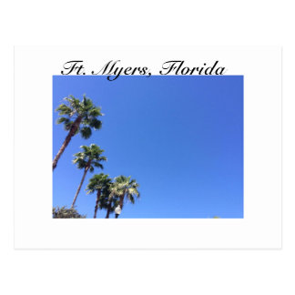Palm Trees and Blue Sky - Ft. Myers Postcard