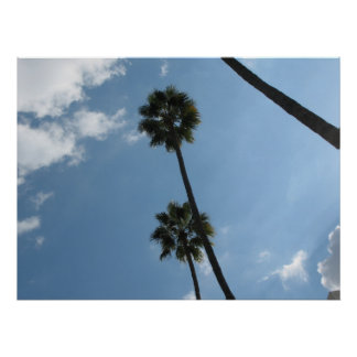 Palm Trees and Sky Poster