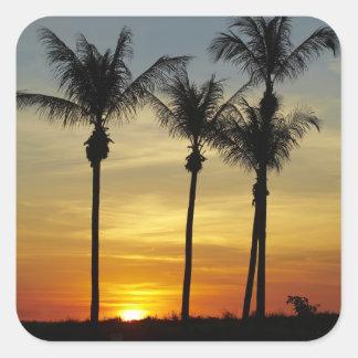 Palm trees and sunset, Mindil Beach, Darwin Square Sticker