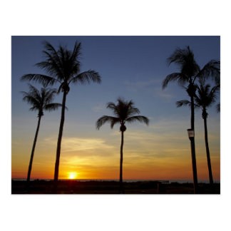 Palm trees and sunset, Mindil Beach Post Cards