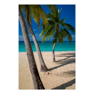 Palm trees and turquoise water along Seven-Mile Poster