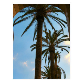 Palm Trees at Union Station Postcard