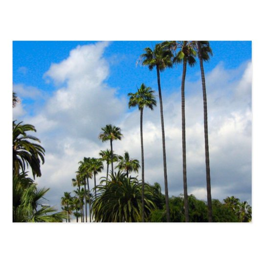 Palm Trees & Clouds Postcards