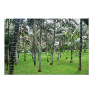 Palm Trees Forest Poster