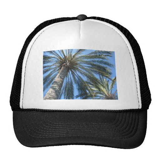 palm trees trucker hats