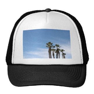 Palm Trees Hats