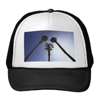 Palm Trees Hat
