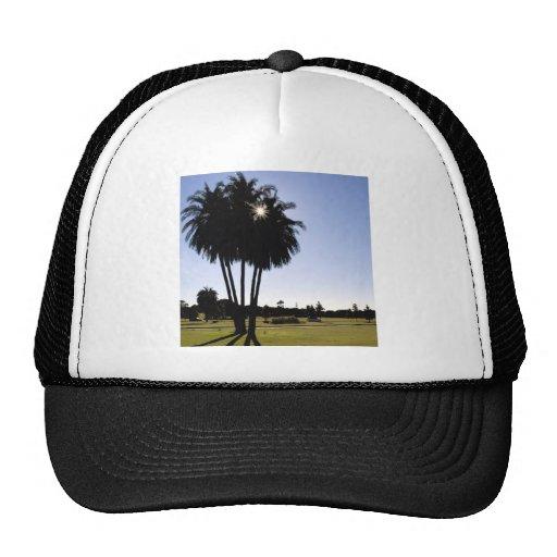 Palm trees mesh hats