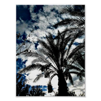 Palm Trees in a Beautiful Blue and White Sky Posters