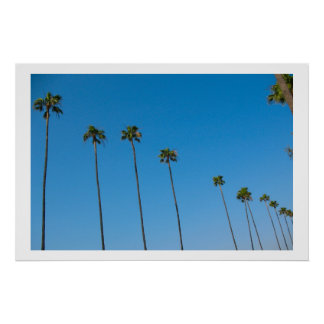 Palm Trees in a Row Posters