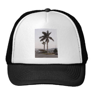 Palm trees in Cairo Mesh Hats