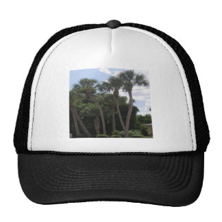Palm Trees Mesh Hat