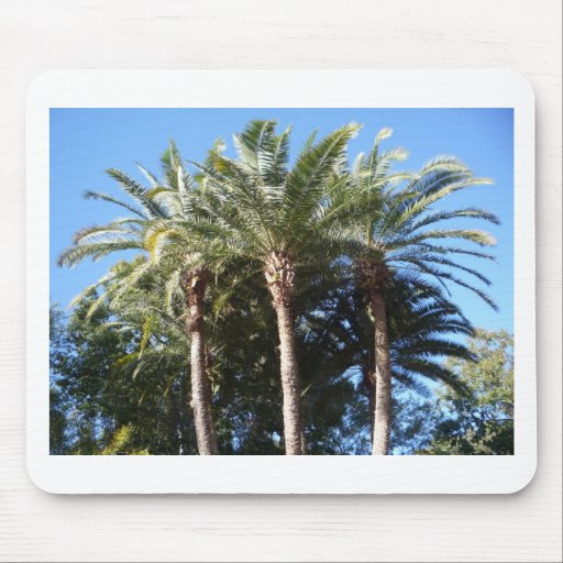 Palm Trees Mousepads