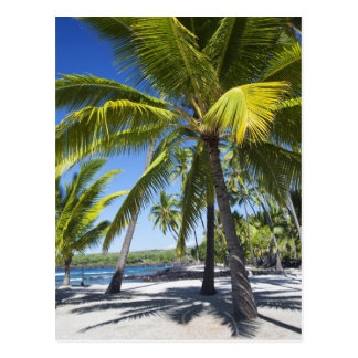 Palm trees, National Historic Park Pu'uhonua o Postcard