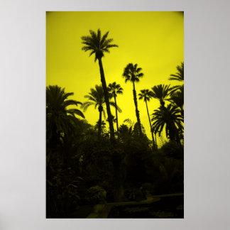 Palm Trees of Morocco Print