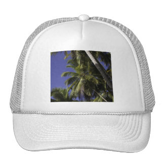 Palm trees on a Caribbean tropical island Hat