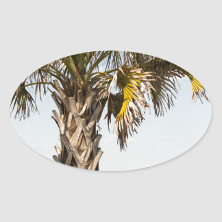 Palm Trees on Myrtle Beach East Coast Boardwalk Oval Sticker