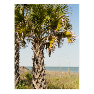 Palm Trees on Myrtle Beach East Coast Boardwalk Postcard