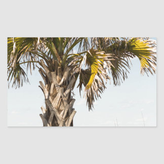 Palm Trees on Myrtle Beach East Coast Boardwalk Rectangular Sticker