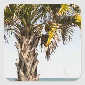 Palm Trees on Myrtle Beach East Coast Boardwalk Square Sticker