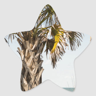 Palm Trees on Myrtle Beach East Coast Boardwalk Star Sticker