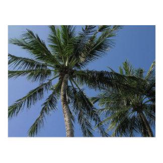 Palm Trees on Postcard