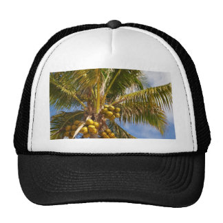 palm trees on the beach hat