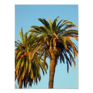 Palm Trees Posters