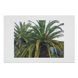 Palm Trees Poster and Print