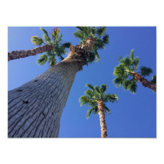 Palm Trees Poster From Palm Spring
