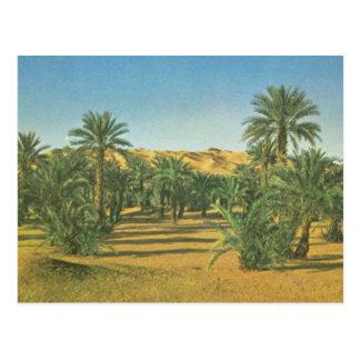 Palm trees, Wadi el Adjal, Libya Postcard