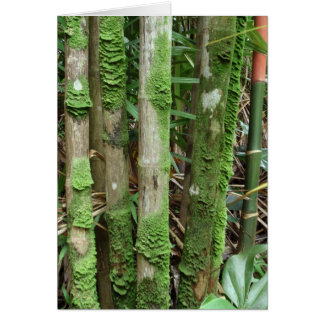 Palm Trunks Covered with Moss Card