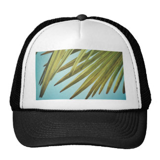 Palm whisk in the summer sky cap