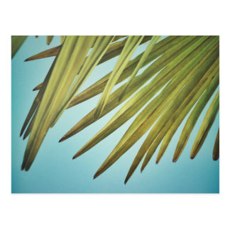 Palm whisk in the summer sky postcard