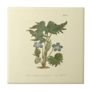 Palmated Violet Blue Illustration Small Square Tile