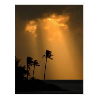 Palmtrees at sunet postcard