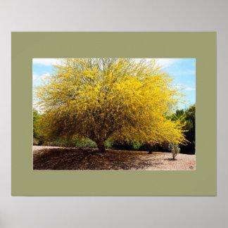 Palo Verde Tree print