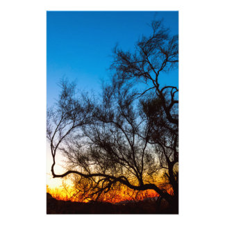 Palo Verde Tree Silhouette Sunrise Stationery