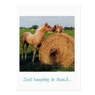 Palomino Horse and Dog Meeting Postcard
