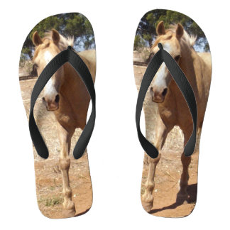 Palomino Horse Greeting, Thongs